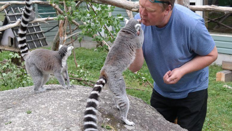 Ulf Henriksson kelar med lemurer.